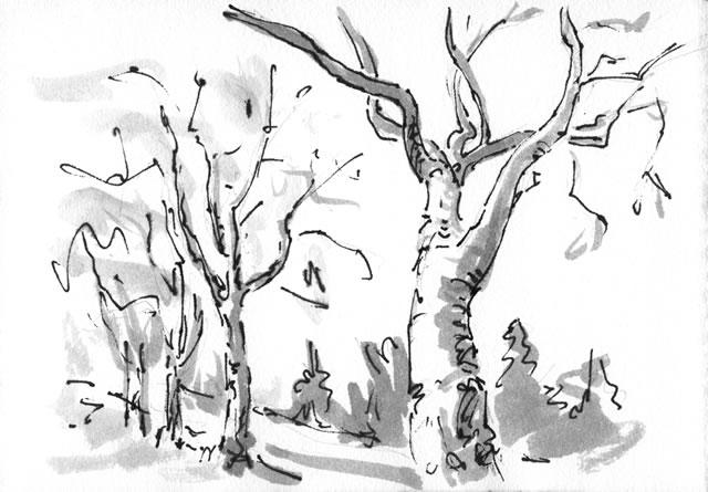 trees_fs