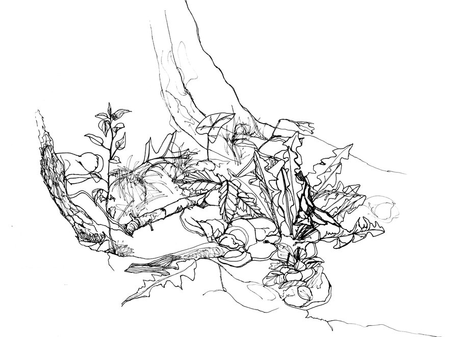 Contour Line Drawing Of A Landscape : The big thing sean of south