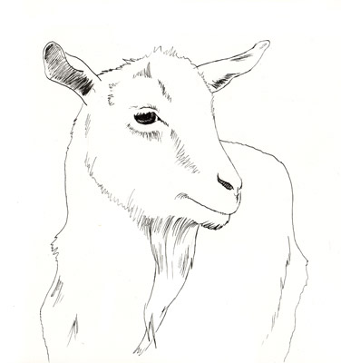 goat_drawing