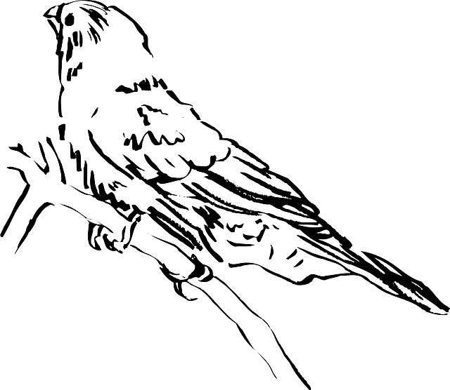 view-drawing-bird-branch-side-animal-feathers (1)