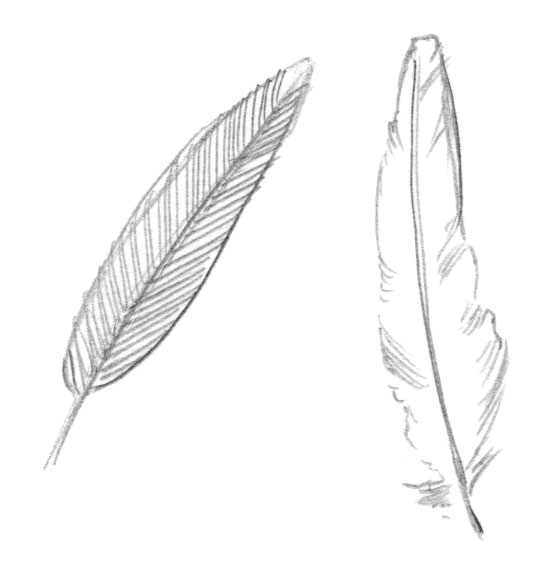 Line Drawing Feather : Friends sean of the south